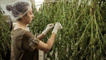 Australia's first legal cannabis industry B2B platform